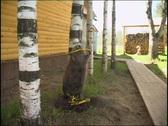 Stuffed beaver at russian village yard Stock Footage