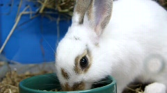 Rabbit in cage Stock Footage
