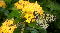 Paper Kite Butterflies Stock Footage