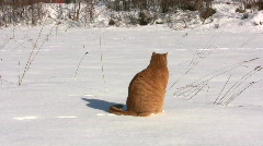 Cat  in the snow Stock Footage