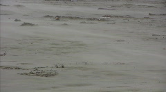 Desertification Stock Footage