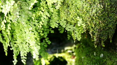Japanese Nature (Moss) Stock Footage
