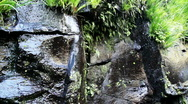 Japanese forest waterfall Stock Footage