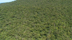 Aerial over the canopy of a tropical rain forest - stock footage