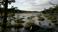 Stock Video Footage of A river runs through forests in Västernorrland, Sweden.