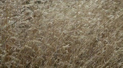 Grasses are shaken by an autumn wind. - stock footage