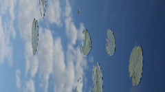 Leaves of water lilies - vertical - stock footage