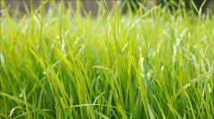 Dolly grass Stock Footage