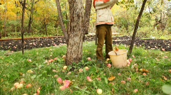 Boy removing long pole apples from apple-tree Stock Footage