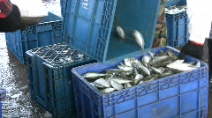 Fishing Industry Fish are Iced Packed Commercial Industry Marine - stock footage