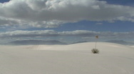 Stock Video Footage of White Sands Yucca 2