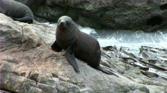 seal looking around - stock footage