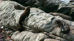 seals chill - stock footage