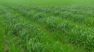 Grassy Field Time Lapse Stock Footage