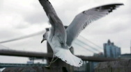 Stock Video Footage of birds in New York