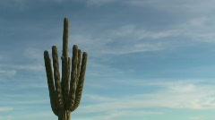 Saguaro Candelabra Time Lapse Stock Footage
