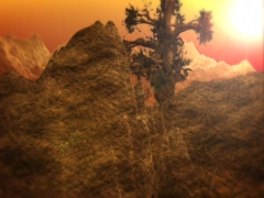 Alone Big Tree - stock footage