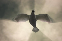 Stock Video Footage of White Dove Descending Among Light Rays NTSC