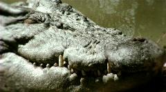 crocodile pan - stock footage