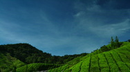 Tea Farm Stock Footage