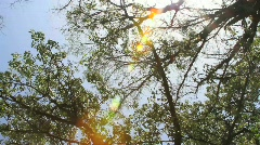 Nature Dreamer Stock Footage