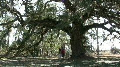 Photographing A Giant Oak In North Carolina Stock Footage