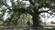 Stock Video Footage of Photographing A Giant Oak In North Carolina