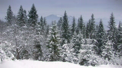 Winter forest, loppable Stock Footage