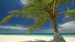 Wonderful palmbeach Stock Footage