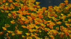 Desert Mountain Spring Stock Footage