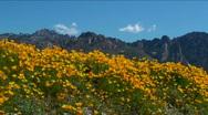 Desert Mountain Wildflower Time Lapse Stock Footage
