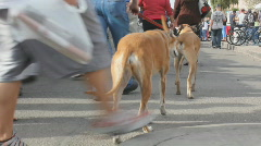 Street fair event - 1 - 2 dogs and their owners - stock footage