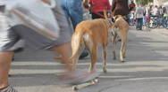 Street fair event - 1 - 2 dogs and their owners Stock Footage