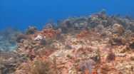 Shark swimming over coral Cedral Stock Footage