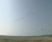 Parachutes landing Stock Footage