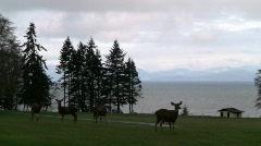 DeerStraight - stock footage