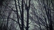 T175 creepy haunted film artsty scary trees Stock Footage