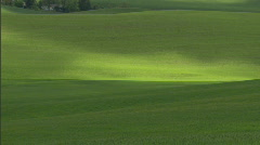 Wheat Field Lush Green 1 Stock Footage