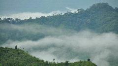 Foggy tropical mountain Stock Footage