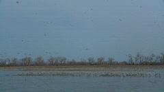 P00923 Sandhill Cranes Roosting on Platte River Stock Footage