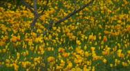 Poppy Path Stock Footage