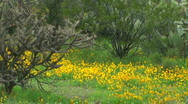 Stock Video Footage of Spring Desert Landscape