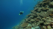 Female diver diving along reef Stock Footage