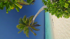 Palmtree on a beach vertical 1 Stock Footage
