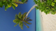 Stock Video Footage of palmtree on a beach vertical 1