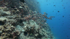 schoal of fish in clear water - stock footage