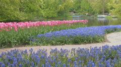 Holland Tulips - stock footage