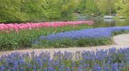 Holland Tulips Stock Footage