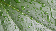 HD 1080p - Wonderful raindrops on a leaf - stock footage