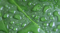 HD 1080p - wonderful waterdrops on a leaf - stock footage